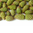 Green pine cones isolated on white — Stock Photo #26387885