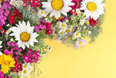 Beautiful bright flowers on yellow background — Stock Photo