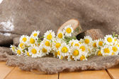 Many chamomile on sacking background — Stock Photo