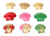 Colorful seashells, isolated on white — Stock Photo
