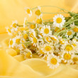 Many chamomile on yellow cloth background — Stock Photo