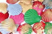 Kleurrijke schelpen achtergrond — Stockfoto