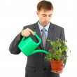Young businessman watering pot isolated on white — Stock Photo #26546241