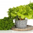 Stock Photo: Useful herbs isolated on white
