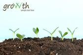 Zelené sazenice roste od soi — Stock fotografie