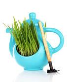 Hierba verde en pote decorativo aislado en blanco — Foto de Stock