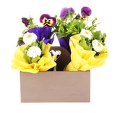 Beautiful spring flowers in wooden crate isolated on white — Stock Photo
