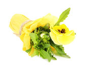 Beautiful pansy flower isolated on white — Stock Photo
