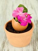 Flores de casca de ovo, em fundo de madeira — Foto Stock