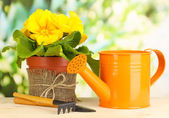 植木鉢緑色の背景で木製のテーブルの上に美しい黄色プリムラ — ストック写真