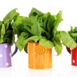 Fresh herbs in colorful watering cans isolated on white — Stock Photo #26605317