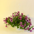 Stock Photo: Purple petunia in flowerpot on light beige background