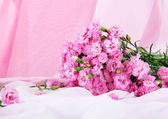Many small pink cloves on light fabric background — Stock Photo