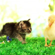 Cute duckling and fluffy kitten on green grass, on bright background — Stock Photo