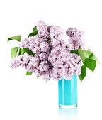 Mooie lila bloemen geïsoleerd op wit — Stockfoto