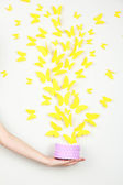 Paper yellow butterflies fly out of box — Stock Photo