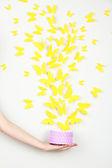 žlutého papíru motýli létají box — Stock fotografie