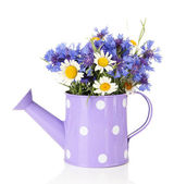 Bouquet of cornflowers and chamomiles in watering can, isolated on white — Stock Photo