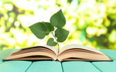 Book with plant on table on bright background — Stock Photo