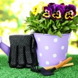 Beautiful pansies flowers on grass on bright background — Stok fotoğraf