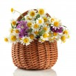 Royalty-Free Stock Photo: Beautiful wild flowers in basket, isolated on white