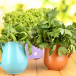 Fresh herbs in pitchers on wooden table on natural background — Stock Photo #26738691