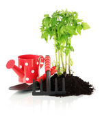 Junge pflanze im boden isoliert auf weiss — Stockfoto