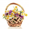 Beautiful wild flowers in basket, isolated on white — Stock Photo