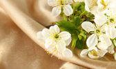 Kvetoucí větve v bankách skla na pozadí béžové tkaniny — Stock fotografie