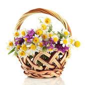 Lindas flores silvestres na cesta, isoladas no branco — Fotografia Stock