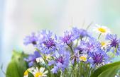 Beautiful cornflowers and chamomiles — Stock Photo