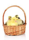 Little ducklings in wicker basket isolated on white — ストック写真