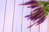 Szałwia kwiaty na fioletowym tle drewniane — Zdjęcie stockowe