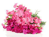Bouquet of carnations, isolated on white — Stock Photo