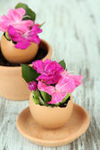 Flowers growing from egg shell, on wooden background — Stock Photo