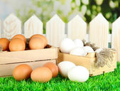 Many eggs in boxes on grass on bright background — Stock Photo