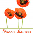 Poppy flowers isolated on white — Stockfoto