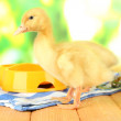 Cute ducklings on bright background — Stock Photo