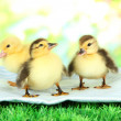 Cute ducklings on fabric, on green grass, on bright background — Stock Photo