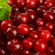 Ripe red cranberries, close u — Stock Photo