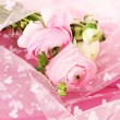 Ranunculus (persian buttercups), on pink cloth — Stock Photo