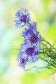 Krásnou kytici chrpy na zeleném pozadí — Stock fotografie