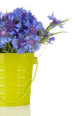 Bouquet of cornflowers in pail, isolated on white — Stock Photo