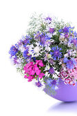 Beautiful bouquet in vase isolated on white — Stock Photo