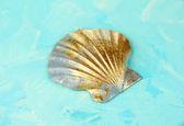 Färgglada seashell på färg trä bakgrund — Stockfoto