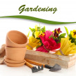 Beautiful spring flowers in wooden crate and gardening tools isolated on white — Zdjęcie stockowe
