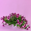 Stock Photo: Purple petuniin flowerpot on light purple background