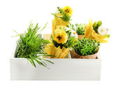 Beautiful spring flowers and grass in wooden crate isolated on white — Stock Photo