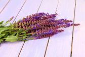 Salvia flowers on purple wooden background — Stock Photo