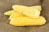 Fresh corn on sackcloth background — Stock Photo